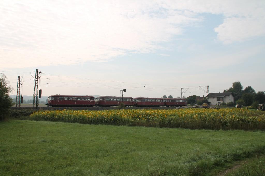 Vier Schienenbusse der OEF durchquerten am frühen 12.09.2015 die Sonnenblumenfelder bei Niederwalgern.