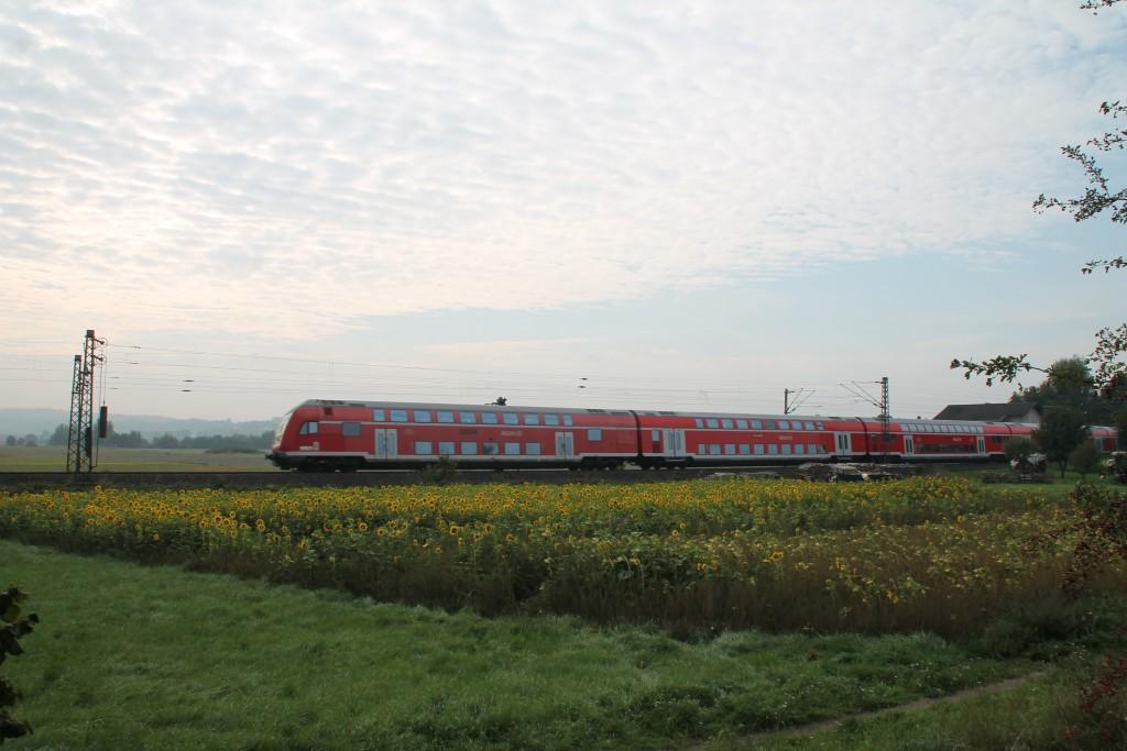 Der Regionalexpress Kassel-Frankfurt durchquerte am 12.09.2015 die Sonnenblumen bei Niederwalgern.