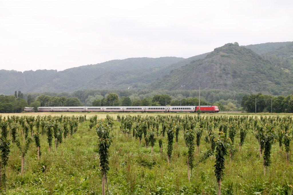 Eine 101 passiert mit ihrem IC die Kirschfelder bei Namedy auf der linken Rheinstrecke, aufgenommen am 19.06.2016.