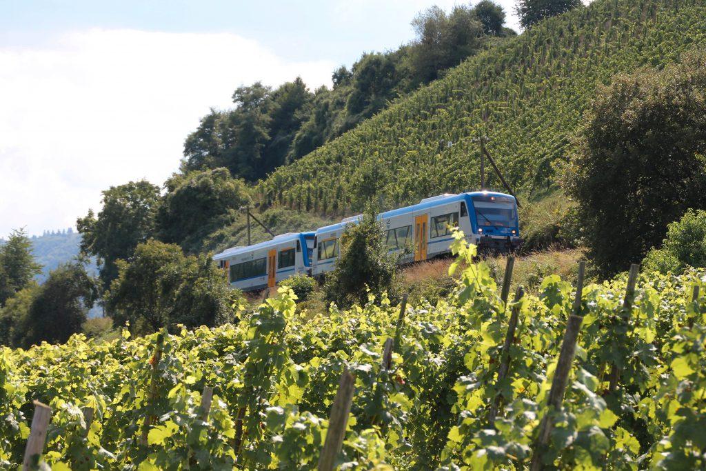 650 131 und 650 132 von Rhenus Veniro in den Weinbergen bei Reil auf der Moselweinbahn, aufgenommen am 27.08.2016.